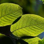 Terra Nuova – Pensa e vivi ecologico